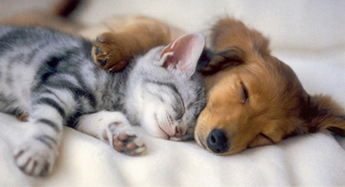cats_sleeping_on_dogs_19